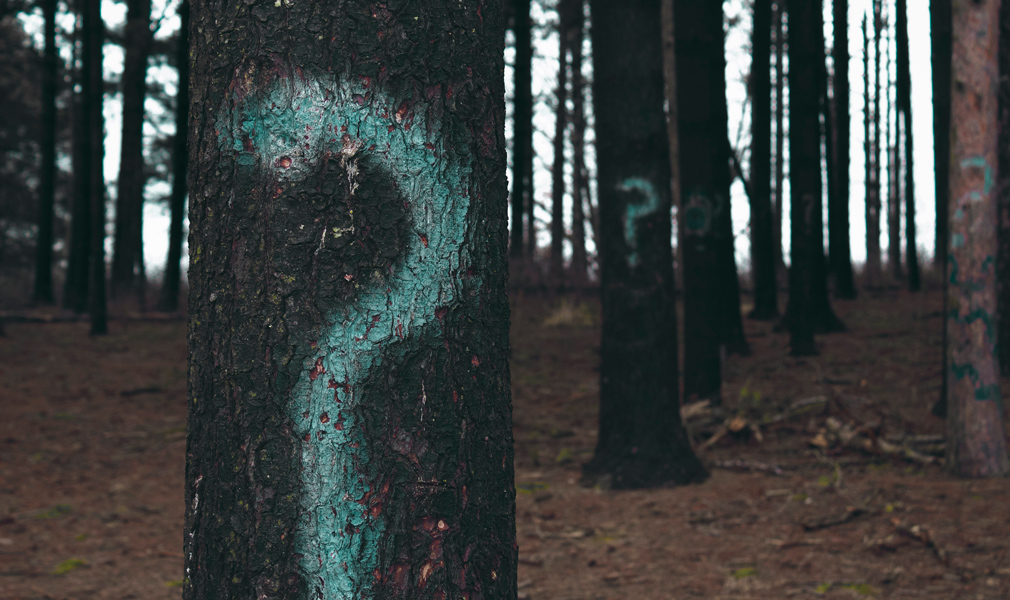 Interrogación pintada en árboles